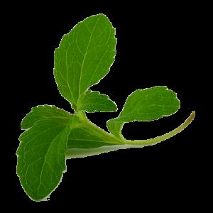 Stevia-leaf-300x300