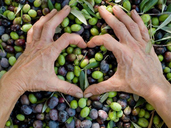 Βιολογική – Μεσογειακή διατροφή βασισμένη στο ελαιόλαδο των 1.500 πολυφαινολών,  τα σύκα και το σπάνιο Ικαριώτικο* ρεικίσιο μέλι. *Το νησί των μακροβιότερων στον κόσμο.